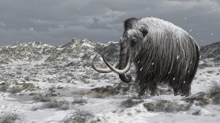 Палеонтологи выясняют, где мамонты переживали суровые периоды