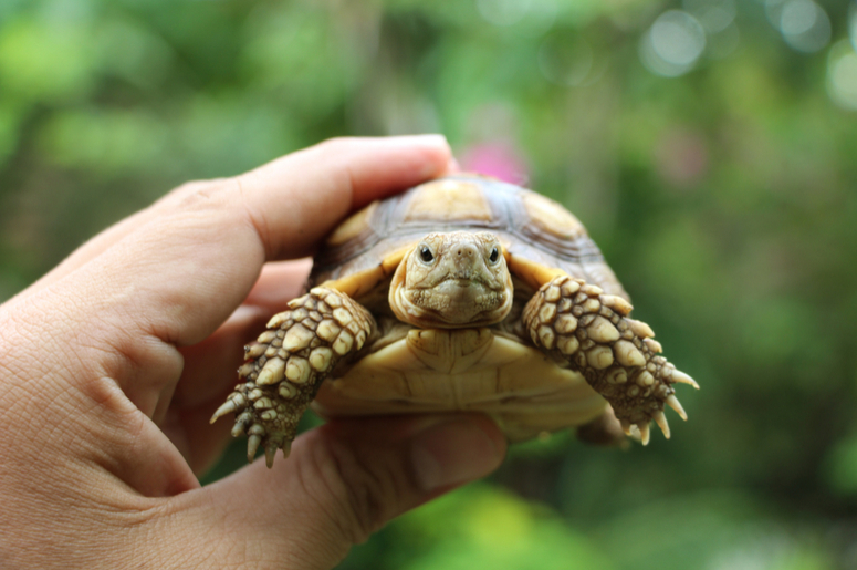 Ученые выяснили, что пол черепах зависит от температуры гнезда